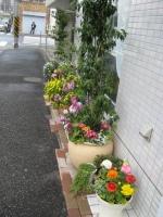 店頭の花4_7.JPG