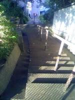 坂の下の猫.jpg