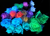 光るバラ.jpg