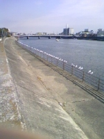 鶴見川かもめ.JPG