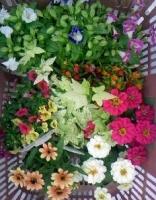 買った花々.JPG