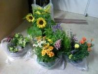 flowers寄せ植え.jpg