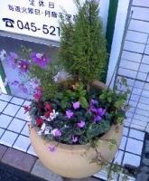 今日の店頭の花.JPG