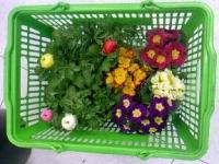 今日買った花.JPG