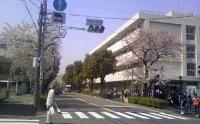 桜R16.jpg