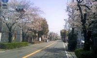 桜産業道路.jpg