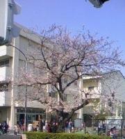 桜小学校.jpg
