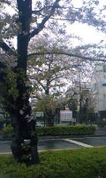 桜新緑.jpg