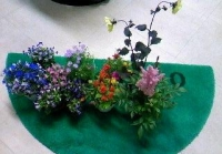 今日の花.jpg